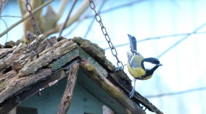 Hochbetrieb am Vogelhaus